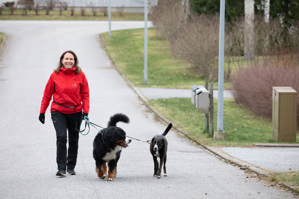 hoitaja ulkoiluttaa koiria